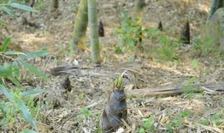 雨の後は筍が次々と顔を出してきます。その状況をたとえていう表現は・・・